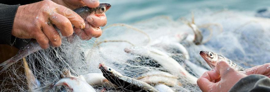 Gestion durable des stocks de pêche